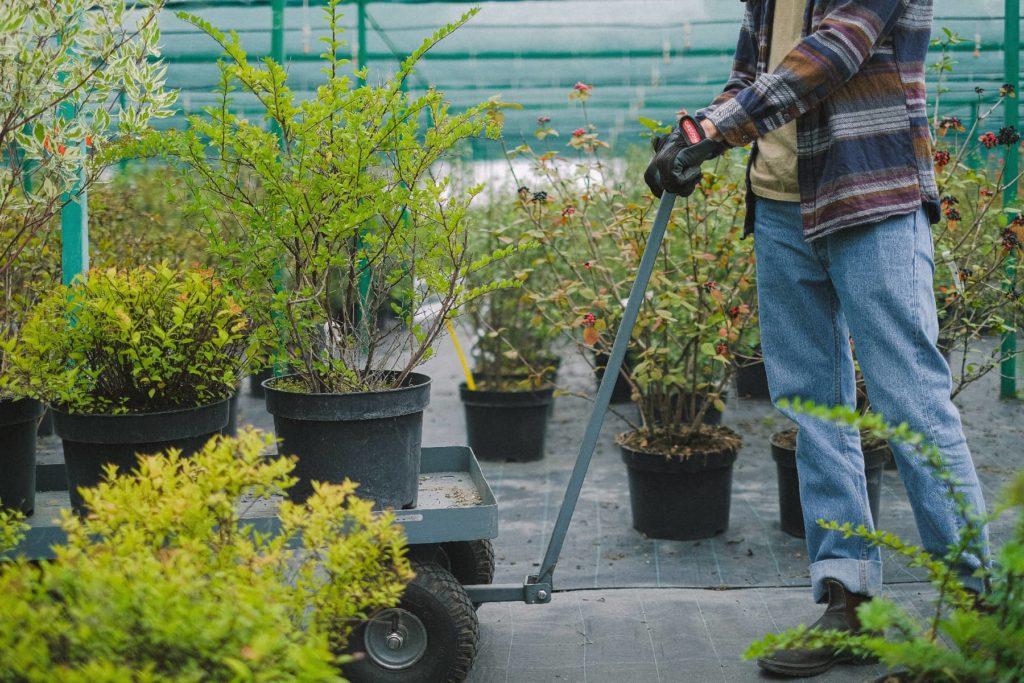 Chariot de jardin 4 roues avec plateau sans parois pour le transport des plantes